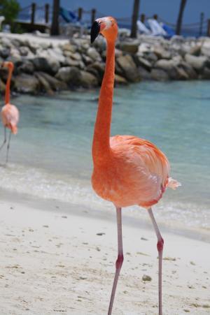 flamingo-641085 1920